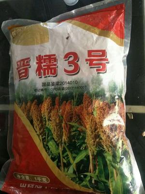 山东省菏泽市巨野县晋糯3号 1等品 霉变 ≤1%