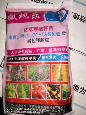 河南省安阳市内黄县土壤改良肥  防死棵烂苗1000g