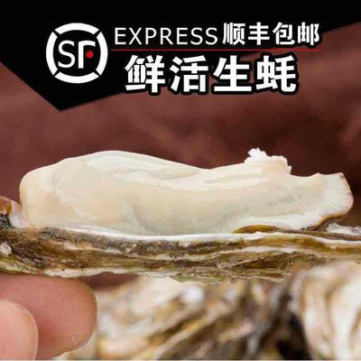 湖北省襄阳市谷城县山东乳山牡蛎 人工殖养 2-3两/只