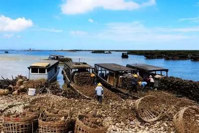 这是一张关于北海牡蛎 人工殖养 1-2两/只 的产品图片