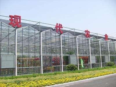 天津静海县连栋棚 玻璃温室