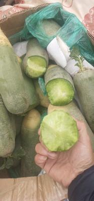 山东省青岛市莱西市水果萝卜 1~1.5斤