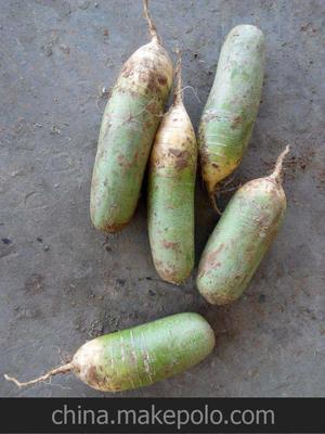 河南省周口市太康县青萝卜 1.5~2斤