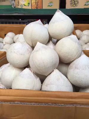 广东省广州市白云区椰皇  1 - 1.5斤 泰国进口原箱/24颗