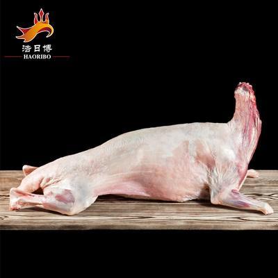 宁夏回族自治区固原市西吉县小尾寒羊肉 生肉
