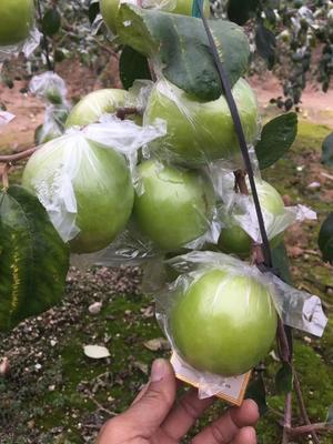 这是一张关于青枣 直口 80g 的产品图片