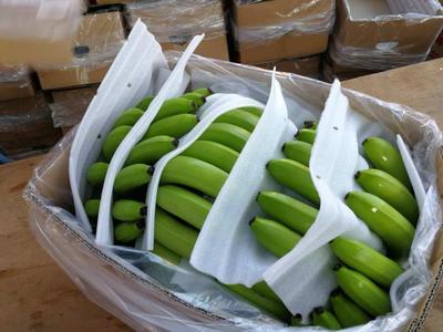 云南省西双版纳傣族自治州景洪市缅甸香蕉 七成熟