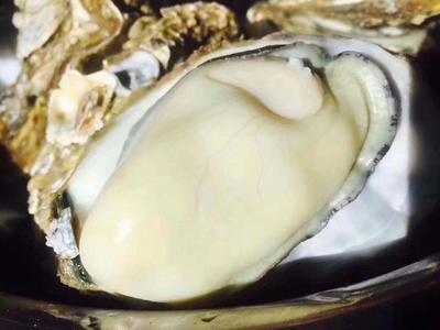 山东省青岛市黄岛区乳山牡蛎 野生 2-3两/只