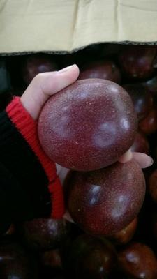 广西壮族自治区崇左市凭祥市紫色百香果 70 - 80克