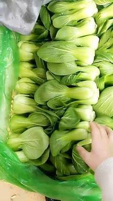 河北省邯郸市丛台区北方小油菜 1~2两