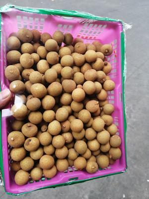 陕西省西安市未央区泰国龙眼 15mm以上