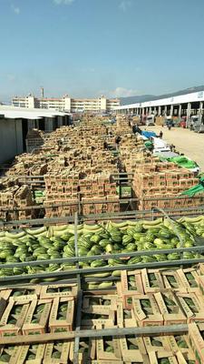 云南省西双版纳傣族自治州景洪市甜王西瓜 6斤打底 8成熟 1茬 无籽