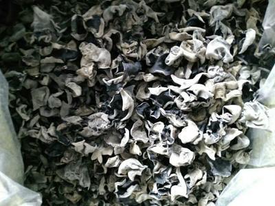 吉林省干黑木耳 1年以上