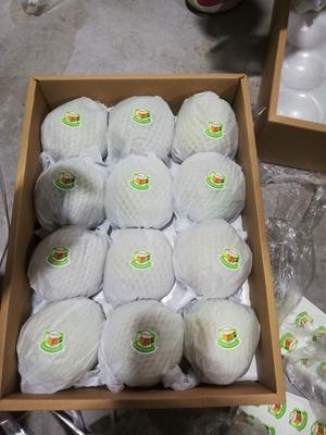 山西省忻州市原平市酥梨 65mm以上 150-200g