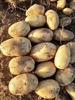 河北省承德市围场满族蒙古族自治县围场马铃薯 2两以上