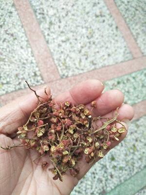 陕西省渭南市富平县红花椒 一级 干花椒