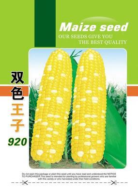 云南省玉溪市通海县库普拉902玉米 带壳 甜