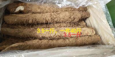 山西省太原市杏花岭区长山药 通货