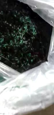 福建省漳州市东山县牛蛙苗