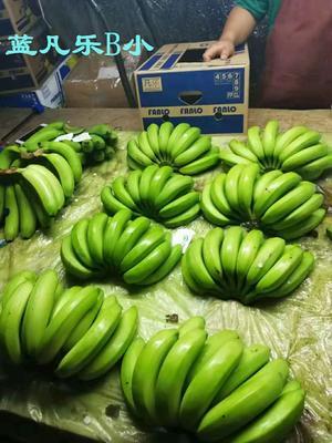 广东省深圳市罗湖区菲律宾香蕉 七成熟