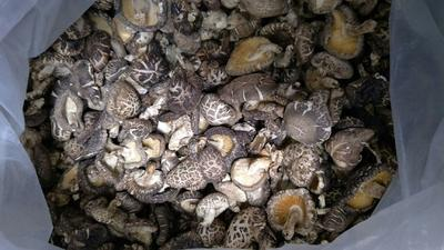 湖北省宜昌市远安县原木干香菇 散装 1年以上