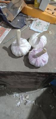 陕西省西安市雁塔区金乡大蒜 混级统货 多瓣蒜