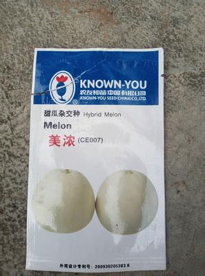 海南省儋州市儋州市白玉甜瓜 0.5斤以上