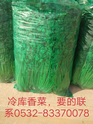 山东省青岛市平度市铁杆青香菜 50cm