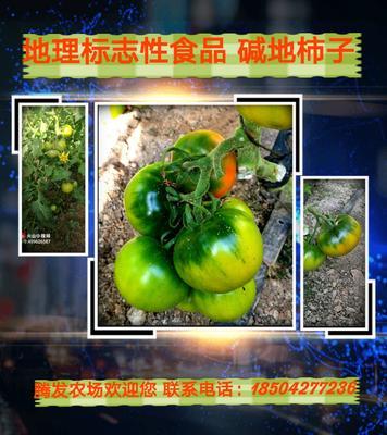 辽宁省盘锦市盘山县草莓柿子 1 - 2两以上