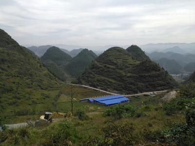 贵州省铜仁市沿河土家族自治县中华豪猪 20-30斤