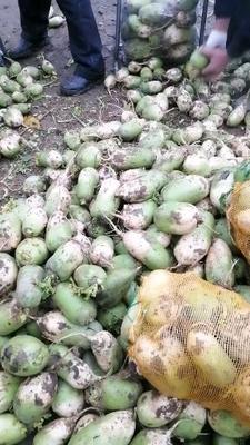 河南省南阳市新野县791罐萝卜 1.5~2斤