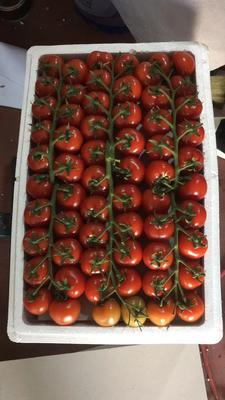 山东省潍坊市寿光市串红小柿子