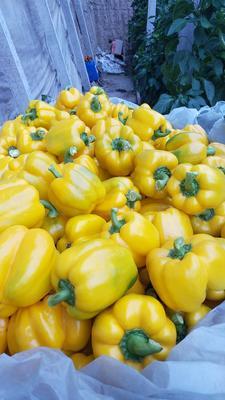 这是一张关于五彩椒 混装通货 甜辣 黄色 的产品图片