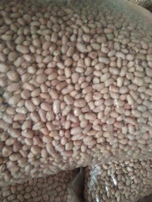 内蒙古自治区通辽市科尔沁左翼后旗白沙系列花生 花生米 干货