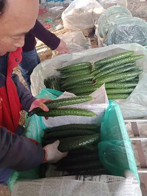 山东省潍坊市寿光市翠玉黄瓜 25~35cm