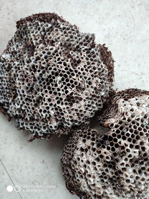 这是一张关于蜂房 的产品图片