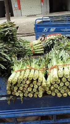 湖北省咸宁市嘉鱼县红叶香莴苣 1.5~2.0斤 55cm