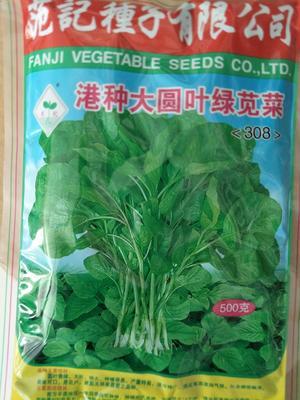 河南省郑州市惠济区青苋菜种子