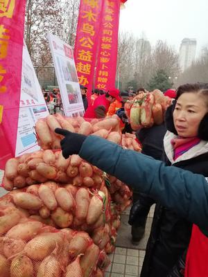 河南省周口市淮阳县高青萝卜 1.5~2斤