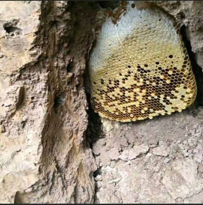 云南省西双版纳傣族自治州景洪市土蜂蜜 玻璃瓶装 2年以上 98%