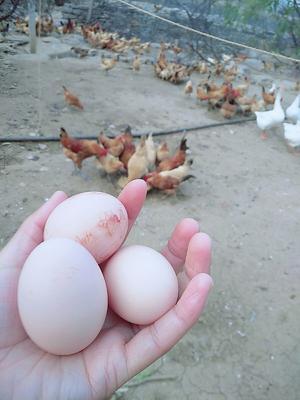 这是一张关于笨鸡蛋 食用 散装 的产品图片
