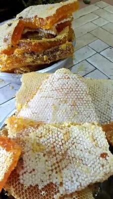 云南省红河哈尼族彝族自治州蒙自市土蜂蜜 塑料瓶装 2年以上 100%