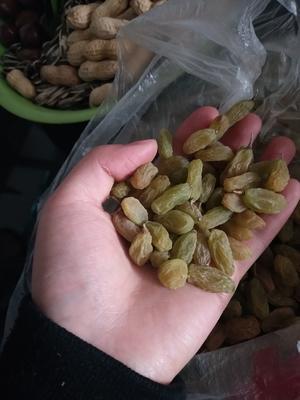 新疆维吾尔自治区哈密地区哈密市无核白葡萄干 一等