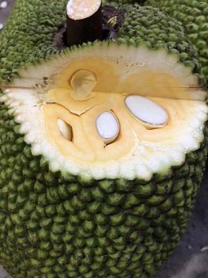 广西壮族自治区崇左市凭祥市红肉菠萝蜜  10斤以下 四级果 全国批发