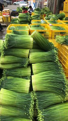 广东省佛山市三水区韭菜花 头茬 35~40cm