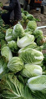 这是一张关于义和秋 3~6斤 净菜 的产品图片