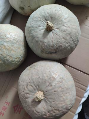 新疆维吾尔自治区新疆维吾尔自治区石河子市板栗南瓜 4~6斤