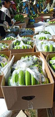 云南省西双版纳傣族自治州勐腊县西双版纳香蕉 七成熟