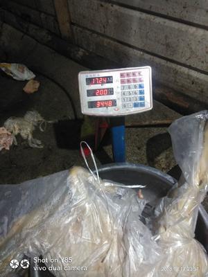 重庆黔江区羊肉类 生肉