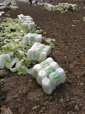 这是一张关于义和秋 6~10斤 净菜 的产品图片